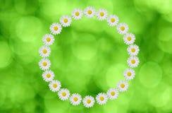 Κύκλος λουλουδιών Στοκ Εικόνες
