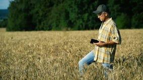 Ένας μέσης ηλικίας γεωπόνος εξετάζει τα αυτιά του σίτου στον τομέα και γράφει τις πληροφορίες για μια ταμπλέτα σε ένα ηλιόλουστο  απόθεμα βίντεο