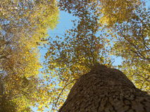 Ένας μίσχος του δέντρου το φθινόπωρο στοκ φωτογραφία