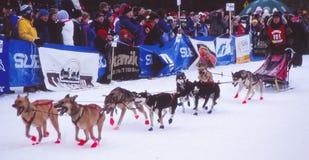 Ένας μαραθώνιος ελκήθρων σκυλιών είναι εν εξελίξει Στοκ Εικόνες