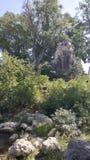 Ένας μεγάλος banyan κορμός δέντρων και ένας παλαιός ναός στοκ εικόνα