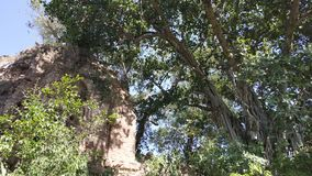 Ένας μεγάλος banyan κορμός δέντρων με ένα παλαιό κτήριο στοκ φωτογραφία με δικαίωμα ελεύθερης χρήσης