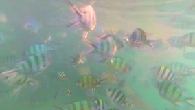 Ένας μεγάλος αριθμός ψαριών κολυμπά γύρω από τους σκοπέλους Σκάφανδρο που βουτά στις μάσκες νησί τροπικό Φως του ήλιου μέσω του ν απόθεμα βίντεο