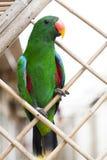 Ένας μεγάλος παπαγάλος είναι ένα πράσινο macaw Στοκ εικόνες με δικαίωμα ελεύθερης χρήσης