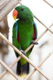 Ένας μεγάλος παπαγάλος είναι ένα πράσινο macaw Στοκ Εικόνες