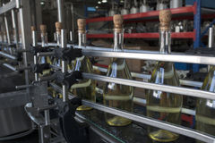 Ένας μεταφορέας για την παραγωγή του λαμπιρίζοντας κρασιού στοκ φωτογραφίες με δικαίωμα ελεύθερης χρήσης