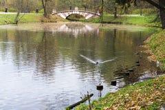 Ένας μικρός διακοσμητικός πεζός γεφυρών πέρα από μια δεξαμενή στο δασικό πάρκο πόλεων Στοκ Φωτογραφία