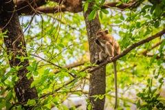 Ένας μικρός καφετής και γούνινος άγριος πίθηκος κάθεται και τρώει τα τρόφιμα στο δέντρο στο τροπικό δάσος φύσης στοκ φωτογραφία με δικαίωμα ελεύθερης χρήσης