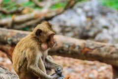 Ένας μικρός καφετής και γούνινος πίθηκος κάθεται και τρώει τα τρόφιμα στο τροπικό δάσος στοκ εικόνες