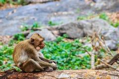 Ένας μικρός καφετής και γούνινος πίθηκος κάθεται και τρώει τα τρόφιμα στο τροπικό δάσος στοκ φωτογραφία με δικαίωμα ελεύθερης χρήσης