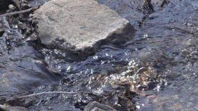 Ένας μικρός κολπίσκος βουνών που βγαίνει στη λίμνη παπιών Στοκ εικόνες με δικαίωμα ελεύθερης χρήσης