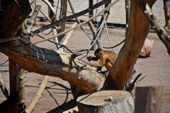 Ένας μικρός πίθηκος κάθεται με μια πέτρα σε ένα κλουβί, καλοκαίρι Στοκ φωτογραφία με δικαίωμα ελεύθερης χρήσης