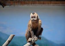 Ένας μικρός πίθηκος κάθεται σε ένα ραβδί σε ένα κλουβί, καλοκαίρι Στοκ φωτογραφία με δικαίωμα ελεύθερης χρήσης