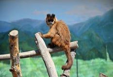 Ένας μικρός πίθηκος κάθεται σε ένα ραβδί σε ένα κλουβί, καλοκαίρι Στοκ φωτογραφίες με δικαίωμα ελεύθερης χρήσης
