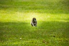 Ένας μικρός πίθηκος και ένας κρουνός Στοκ εικόνα με δικαίωμα ελεύθερης χρήσης