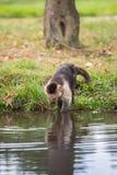 Ένας μικρός πίθηκος στον ποταμό Στοκ Φωτογραφίες