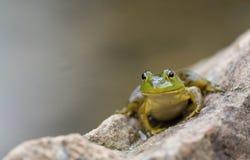Ένας μικρός πράσινος βάτραχος κάθεται σε έναν μεγάλο βράχο από μια λίμνη στο σούρουπο στοκ φωτογραφίες