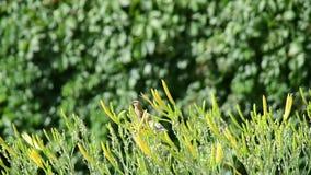 Ένας νεοσσός που πέφτει σε ένα λουλούδι απόθεμα βίντεο