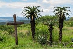 Ένας ξύλινοι σταυρός και μια ομάδα αλόης στοκ φωτογραφίες με δικαίωμα ελεύθερης χρήσης