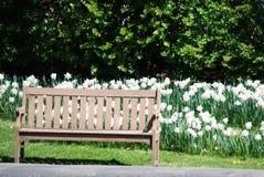 Ένας ξύλινος πάγκος πάρκων μεταξύ των daffodils στο πάρκο Cantigny σε Wheaton, Ιλλινόις Στοκ εικόνες με δικαίωμα ελεύθερης χρήσης