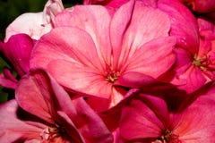 Ένας οφθαλμός λουλουδιών που δεν έχει ανοίξει, καλυμμένος με τα λεπτά νήματα με τις μικρές πτώσεις του νερού Μακροεντολή Στοκ φωτογραφίες με δικαίωμα ελεύθερης χρήσης