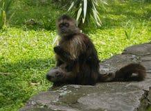 Ένας πίθηκος και το μωρό της Στοκ εικόνες με δικαίωμα ελεύθερης χρήσης
