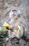 Ένας πίθηκος με την μπανάνα κάθεται στο βράχο Στοκ Φωτογραφία