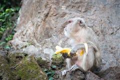 Ένας πίθηκος με την μπανάνα κάθεται στο βράχο Στοκ φωτογραφία με δικαίωμα ελεύθερης χρήσης