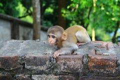 Ένας πίθηκος μωρών θέλει τα τρόφιμα από τους επισκέπτες Στοκ φωτογραφία με δικαίωμα ελεύθερης χρήσης