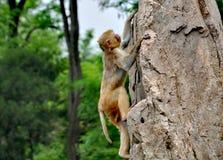 Ένας πίθηκος σε Qingdao, Κίνα Στοκ Φωτογραφία