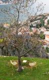 Ένας πίνακας για δύο σε Kotor στοκ εικόνα
