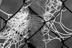Ένας παγωμένος Ιστός αραχνών - λεπτομέρεια Στοκ Φωτογραφία