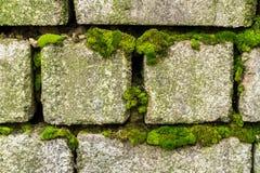 Ένας παλαιός τουβλότοιχος που εισβάλλεται με το πράσινο βρύο Στοκ φωτογραφία με δικαίωμα ελεύθερης χρήσης