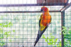 Ένας παπαγάλος σε ένα κλουβί Στοκ φωτογραφίες με δικαίωμα ελεύθερης χρήσης