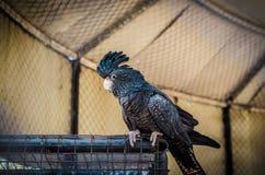 Ένας παπαγάλος Στοκ εικόνες με δικαίωμα ελεύθερης χρήσης