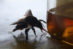 Ένας παράδεισος μελιού μελισσών ` s Στοκ Εικόνες