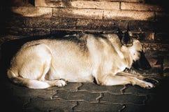 Ένας παλαιός βαρέων βαρών ύπνος σκυλιών στο πάτωμα τούβλου Στοκ φωτογραφία με δικαίωμα ελεύθερης χρήσης