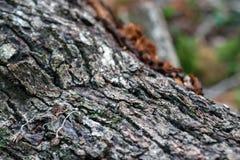 Ένας παλαιός κορμός δέντρων με το μουτζουρωμένο δάσος στο υπόβαθρο Στοκ Φωτογραφία