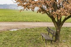Ένας παλαιός πάγκος κάτω από ένα δέντρο Στοκ εικόνα με δικαίωμα ελεύθερης χρήσης