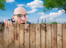 Ένας περίεργος γείτονας Στοκ Εικόνες