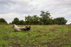 Ένας πεσμένος νεκρός κορμός δέντρων σε έναν πράσινο θερινό τομέα κάτω από έναν ευμετάβλητο συννεφιάζω ουρανό στοκ εικόνα