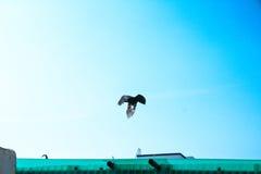 Ένας πετώντας κόρακας Στοκ φωτογραφία με δικαίωμα ελεύθερης χρήσης