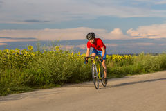 Ένας ποδηλάτης οδηγά σε ένα οδικό ποδήλατο κατά μήκος των τομέων των ηλίανθων Στοκ Φωτογραφίες