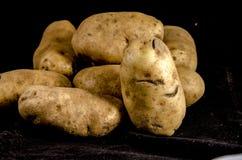Ένας πολύ μεγάλος σωρός της άσπρης πατάτας ` που εξετάζει πίσω σας Στοκ Φωτογραφίες