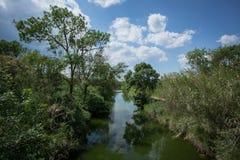 Ένας ποταμός στη μέση ευθυγράμμισε με το δέντρο Στοκ Φωτογραφίες