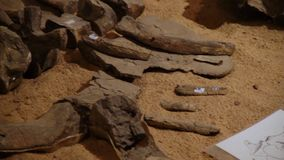 Ένας πυροβολισμός ενός απολιθώματος απόθεμα βίντεο