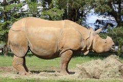 Ένας ρινόκερος Στοκ εικόνα με δικαίωμα ελεύθερης χρήσης