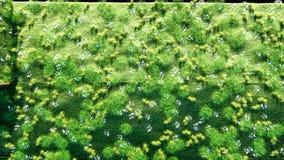 Ένας ρόλος της χλόης στη γη με τις πεταλούδες Βούρτσα της χλόης εικόνες οικολογίας έννοιας πολύ περισσότεροι το χαρτοφυλάκιό μου  ελεύθερη απεικόνιση δικαιώματος