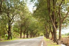 Ένας δρόμος με τα δέντρα Στοκ Εικόνα