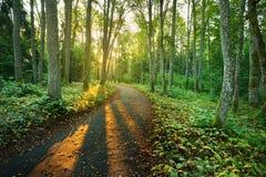 Ένας δρόμος στο δάσος πρωινού Στοκ Εικόνες